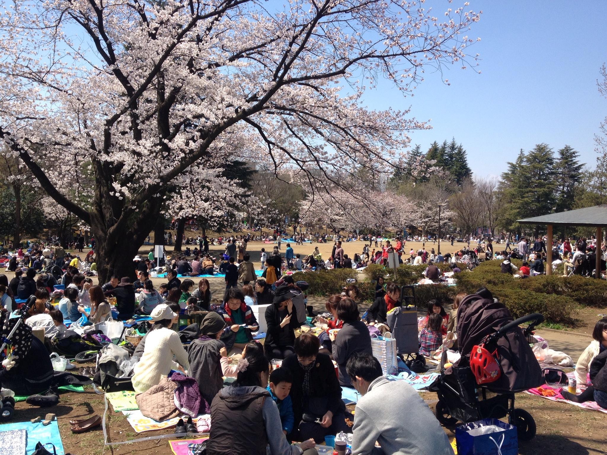 恒例「桜まつり」、4月6日・7日に開催!